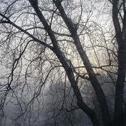 13th Jan 2021 - Freezing Fog