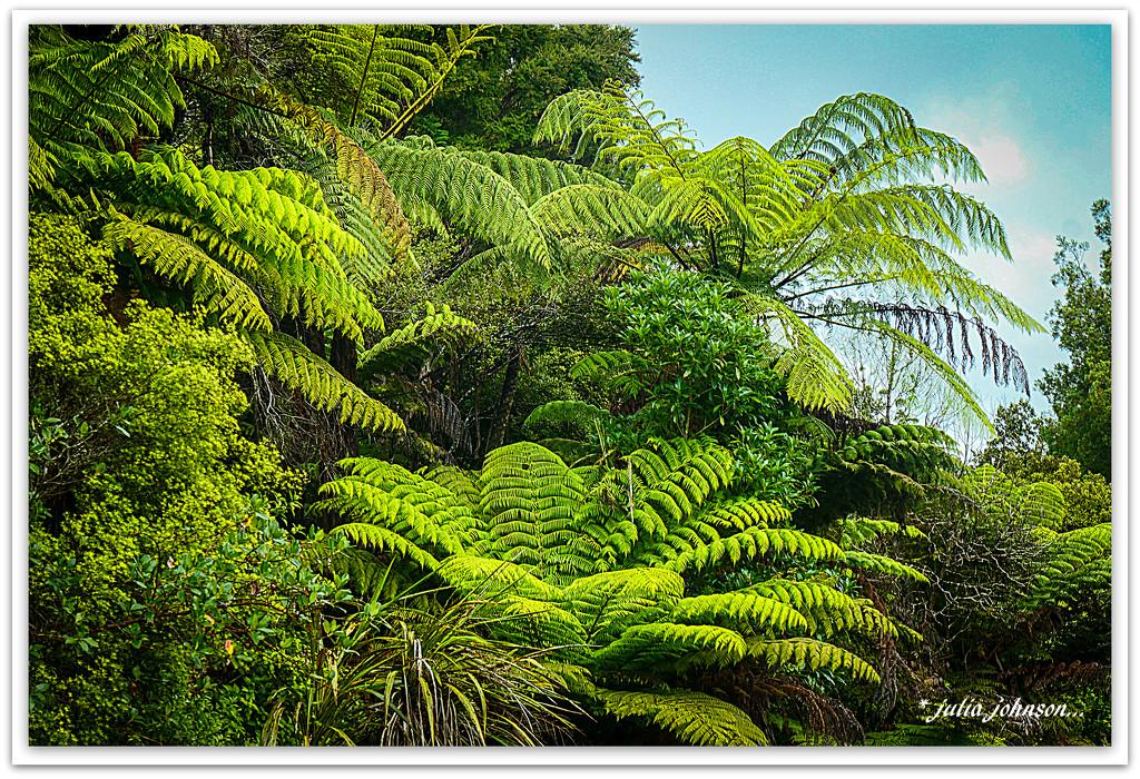 New Zealand Bush... by julzmaioro