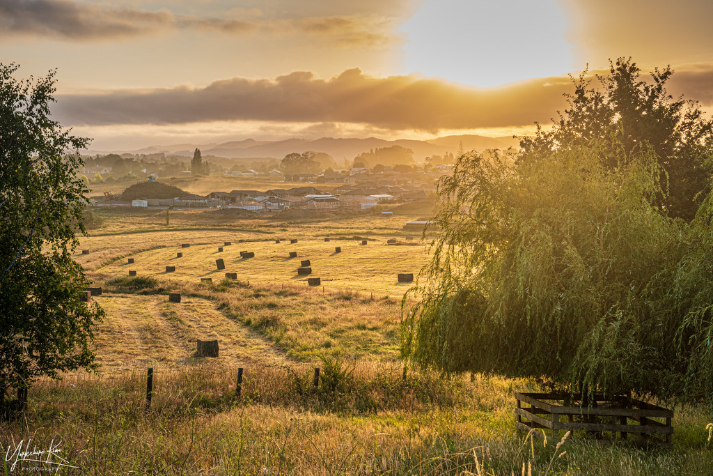 Making Hay While the Sun Shines by yorkshirekiwi