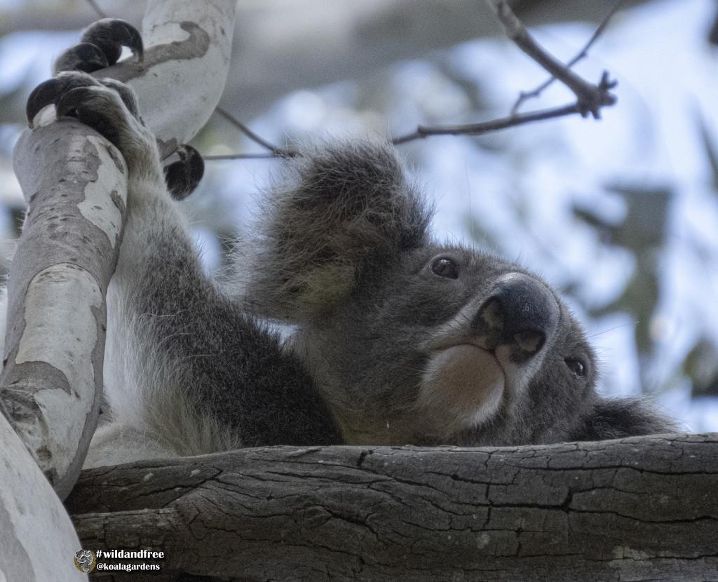 Jesse AKA Houdini by koalagardens