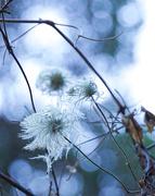 """16th Jan 2021 - """"Truffula Tree"""""""