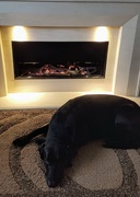 16th Jan 2021 - Just had a new fire fit and Sadie seems to like it!