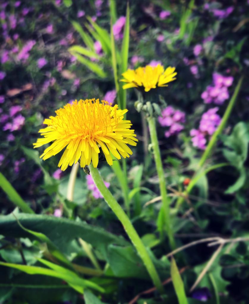 Yellow #4 by loweygrace