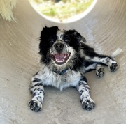 17th Jan 2021 - Smiley happy puppy