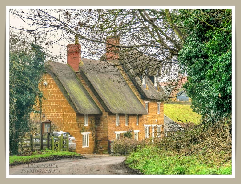 Thatched Cottages,Upper Harlestone by carolmw