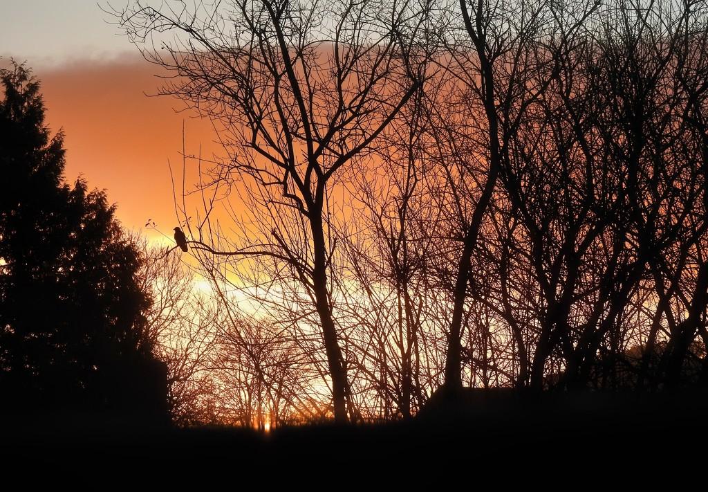 Lockdown Sunrise  by susiemc