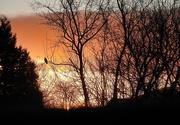 17th Jan 2021 -  Lockdown Sunrise