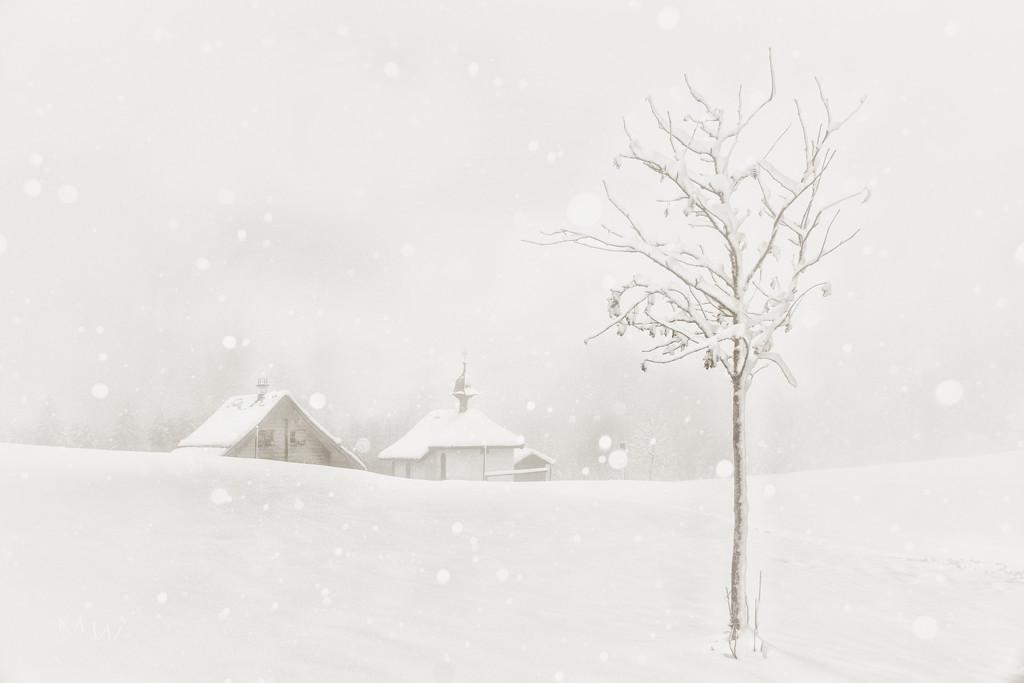 2020-12-17 snowy by mona65