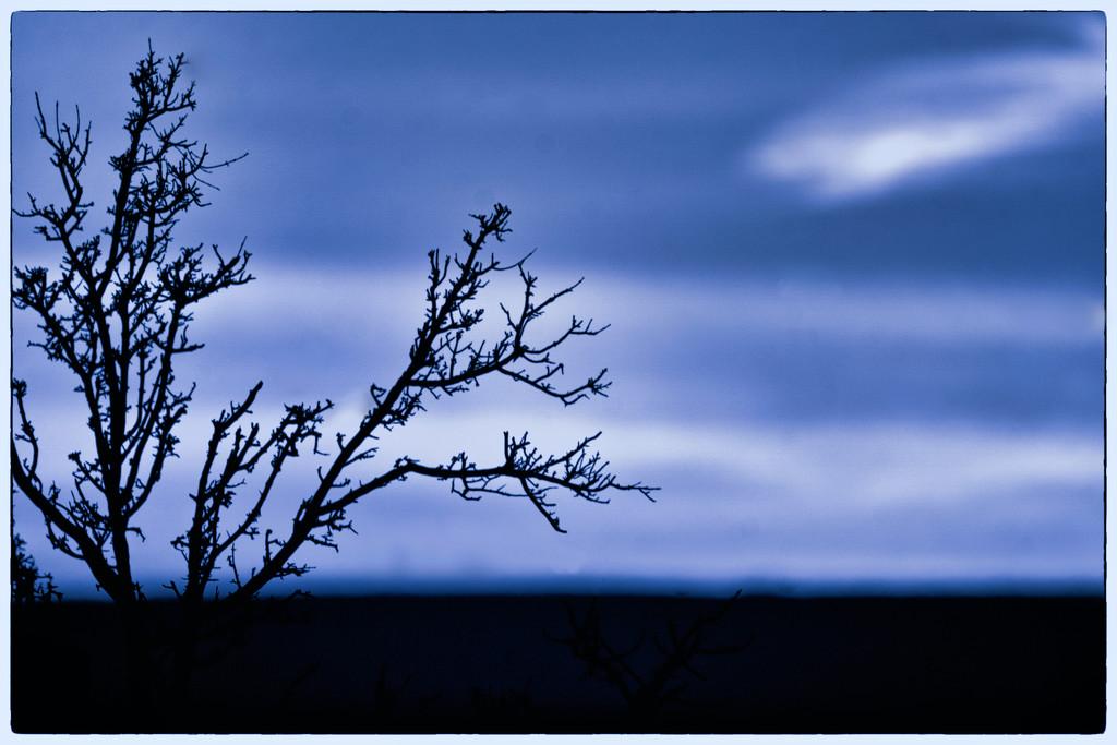 Silhouette in Blue   by joysabin