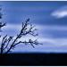 Silhouette in Blue