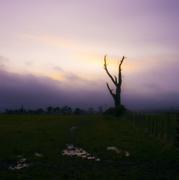 17th Jan 2021 - 0117 Sunset Tree