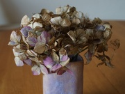17th Jan 2021 - a vase of hydrangea