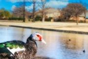 17th Jan 2021 - Nosy Duck
