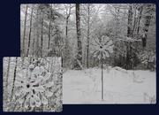 16th Jan 2021 - A Winter Garden - in Colour! :)