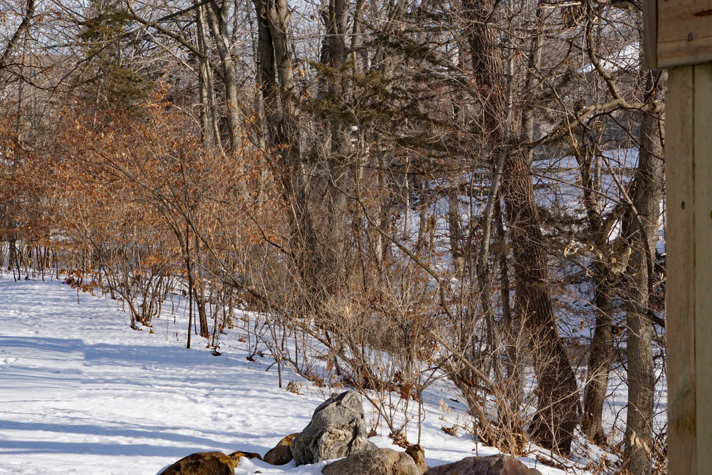 A January walk in the woods by larrysphotos