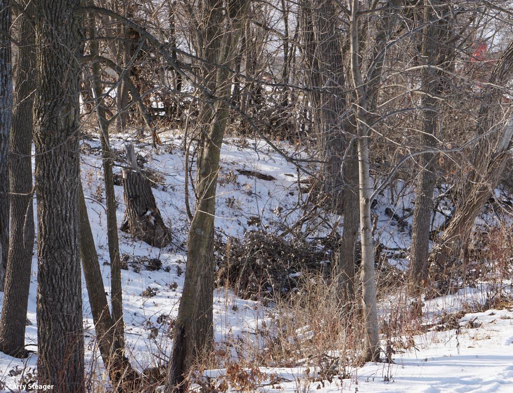 Snow on the ground by larrysphotos
