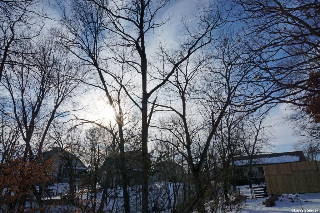 Low winter sun by larrysphotos