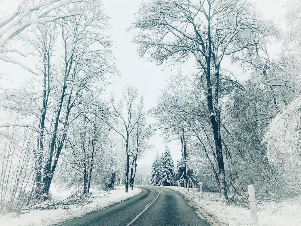 Road trip.  by cocobella