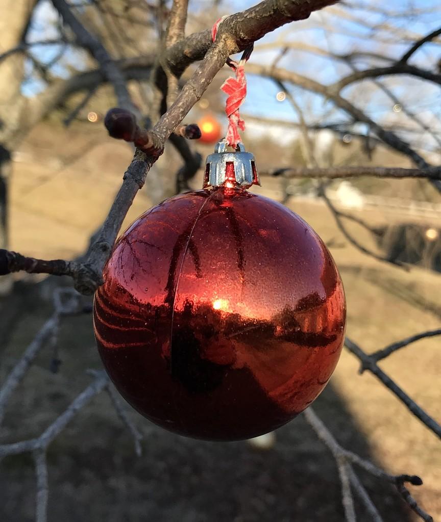 Christmas sunset by mjmaven
