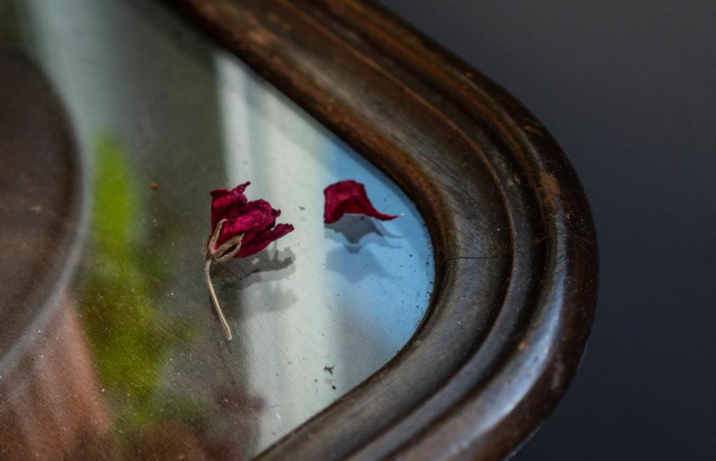 Geranium debris by randystreat