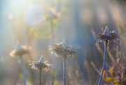 17th Jan 2021 - Cone flower...