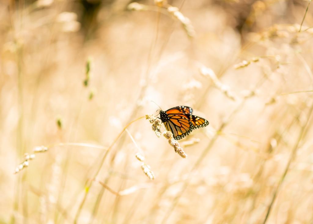 Butterfly High Key by yaorenliu
