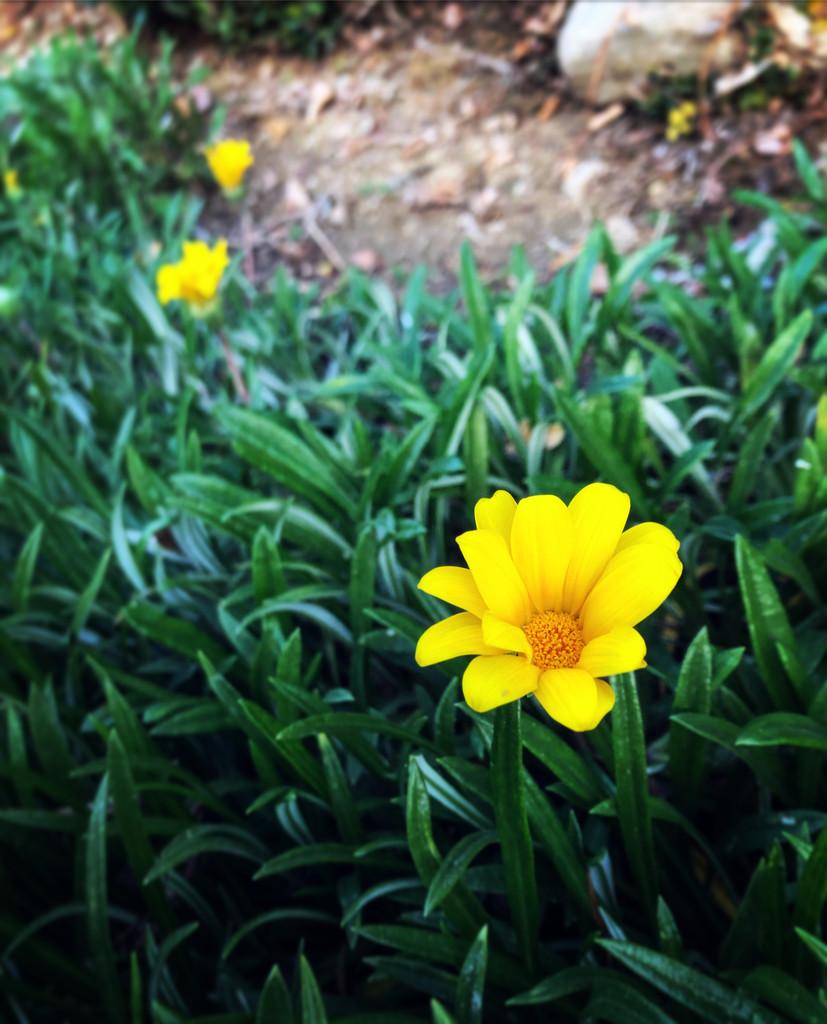 Yellow #5 by loweygrace