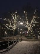 18th Jan 2021 - Snow