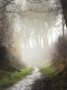 18th Jan 2021 - Followed by the fog