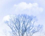 18th Jan 2021 - Tree