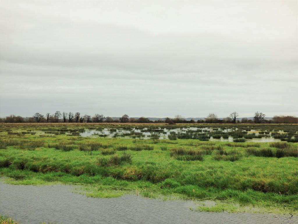 Wet Levels by julienne1