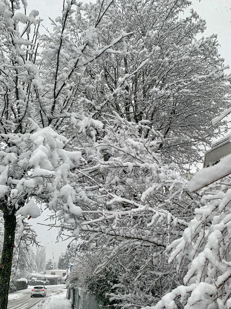 A lot of snow.  by cocobella