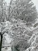 20th Jan 2021 - A lot of snow.