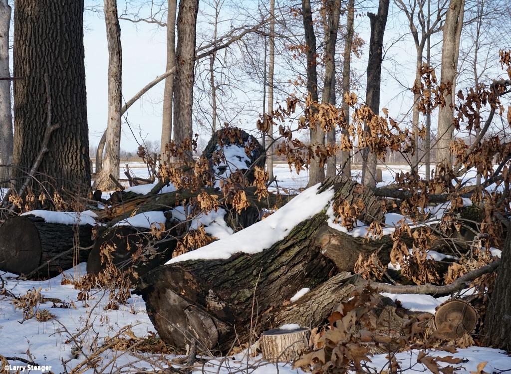 Winter  by larrysphotos