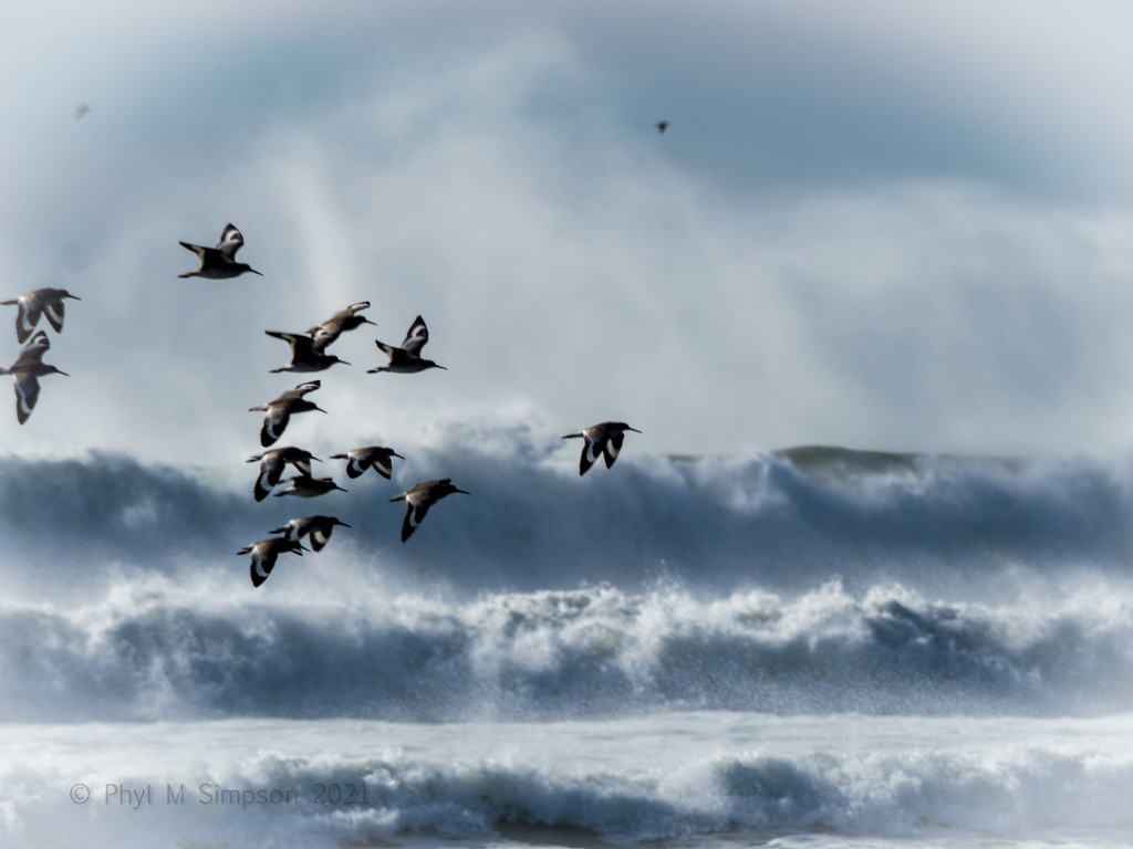 Sea Birds inThe Surf by elatedpixie