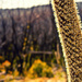 bits and pieces-16 Xanthorrhoea colour and closer