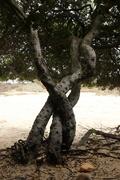 17th Jan 2021 - 2021 01 17 Plaited Trees