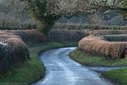 16th Jan 2021 - Abbotstone Road