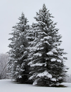 19th Jan 2021 - Snow 2