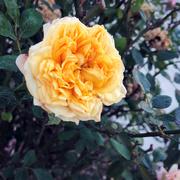 19th Jan 2021 - Yellow #6