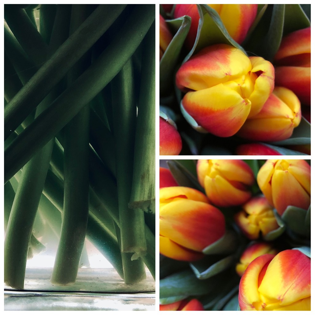 Tulips  by jacqbb
