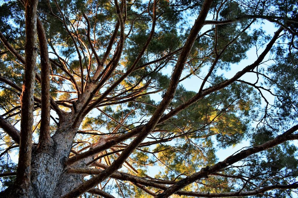 Sunlit Tree by sandlily