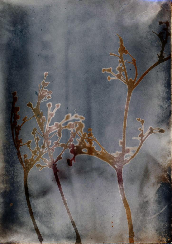 bronze tree 2 by ingrid2101