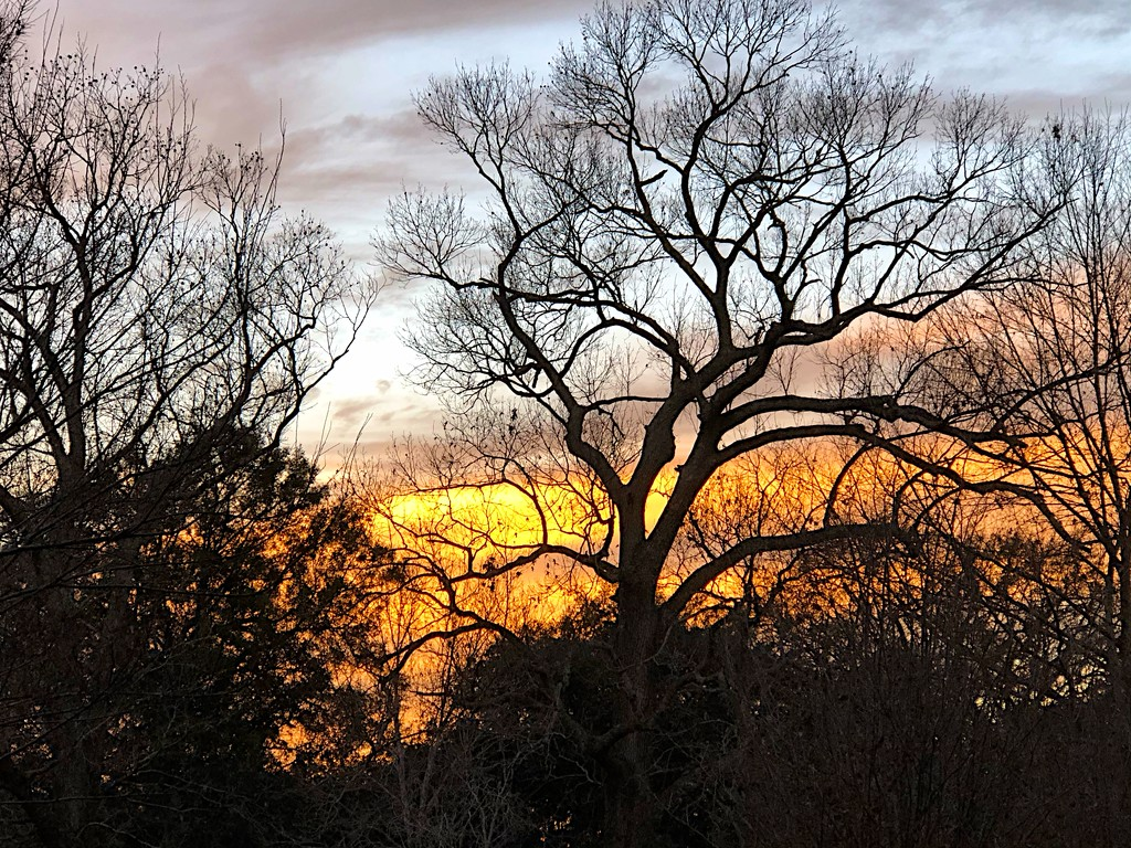 Sunset and bare winter trees by congaree