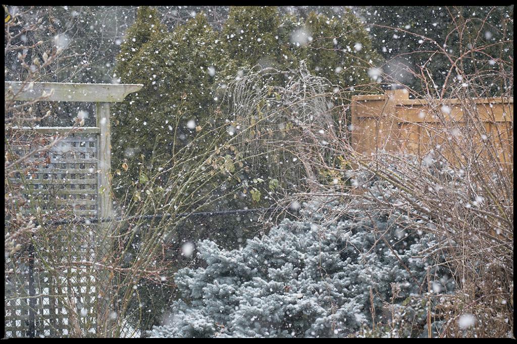 Winter Returns... by gardencat