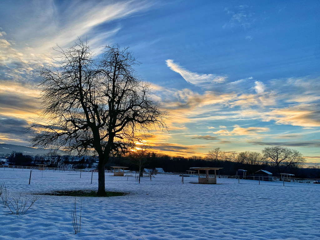 Sunset on the snow.  by cocobella