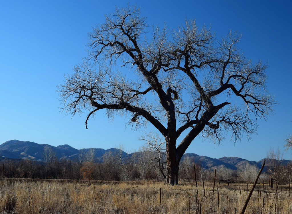 Tree and Foothills by sandlily