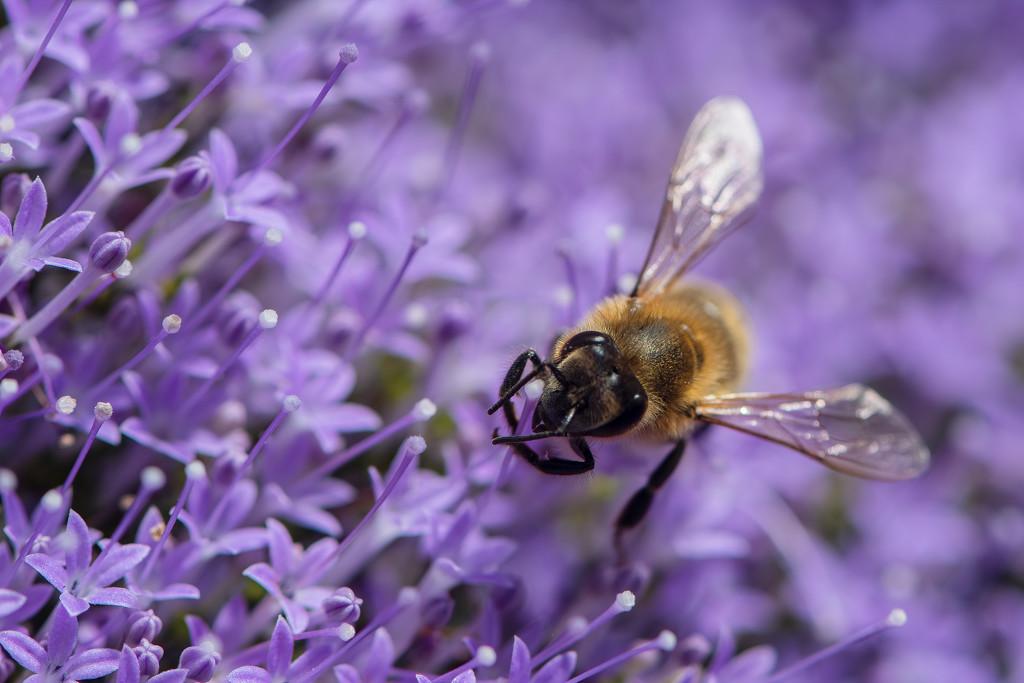 In Purple by yorkshirekiwi