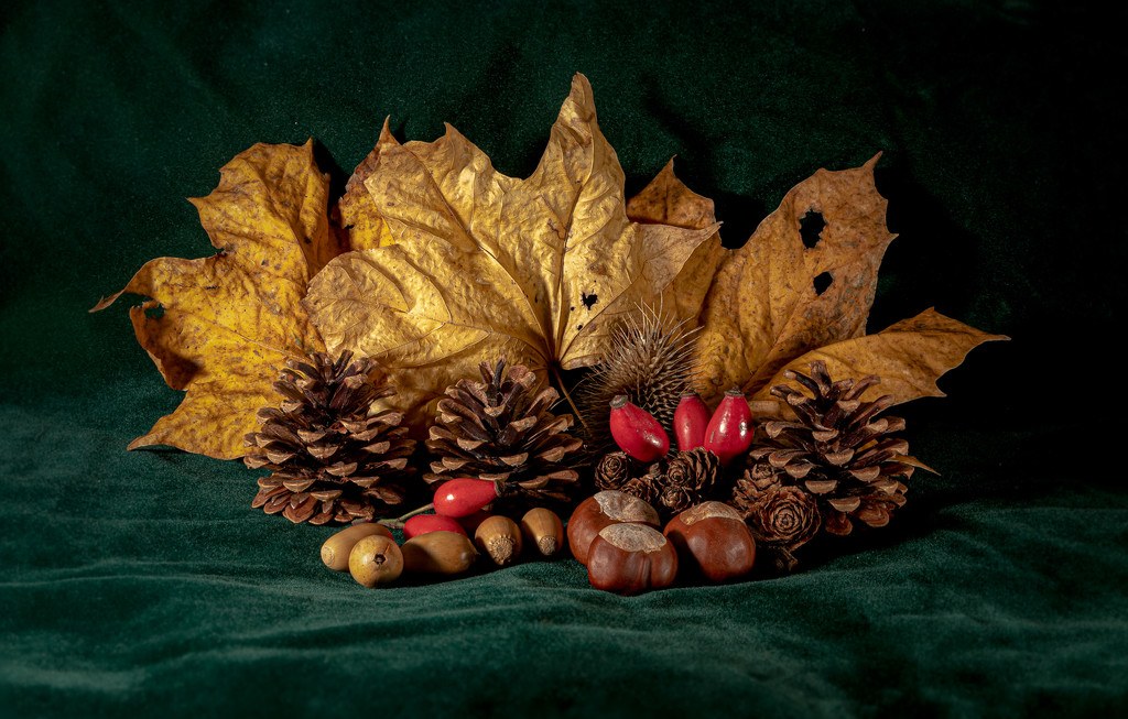 Den - Autumn by mave