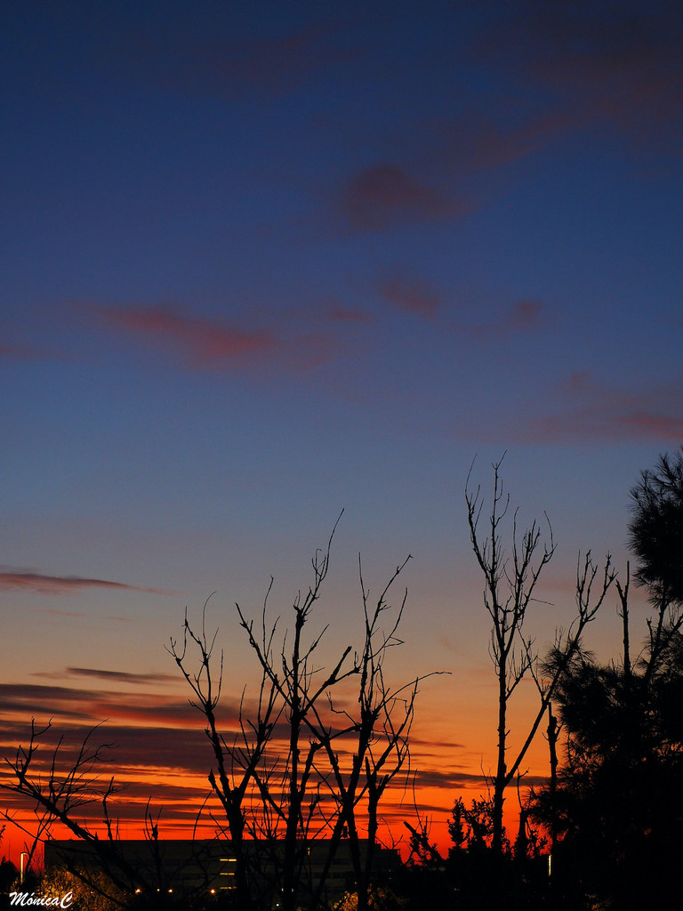 Just before sunrise by monicac